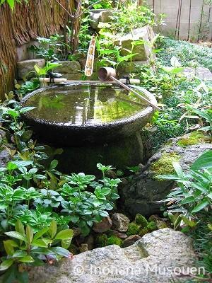 庭を映す水面